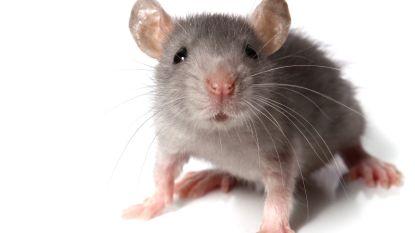 Angstige herinneringen uitschakelen. Bij muizen kan het al, straks ook bij mensen?