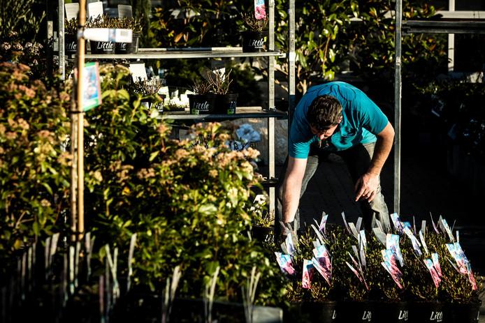 Aardbeien Planten Kopen Intratuin.Tuincentrum Heeft Stunt Klanten Krijgen Gratis Planten In Ruil Voor
