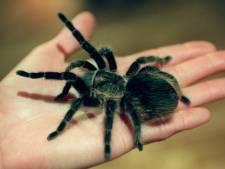 Walibi past act met wurgslangen en vogelspinnen aan na ophef