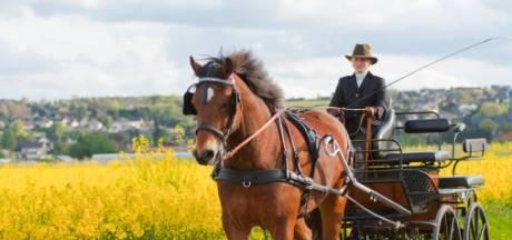 Traditionele koetsen rijden zondag door West-Zeeuws-Vlaanderen