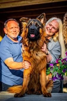 Familie verkoopt klassieke cabrio voor levensreddende operatie hond Jax