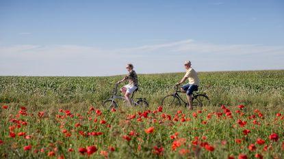 Veiligere fietsverbinding tussen Schore, Sint-Pieterskapelle en Mannekensvere