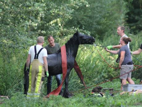 Brandweer Kampen redt paard kinderboerderij met brandslang uit sloot