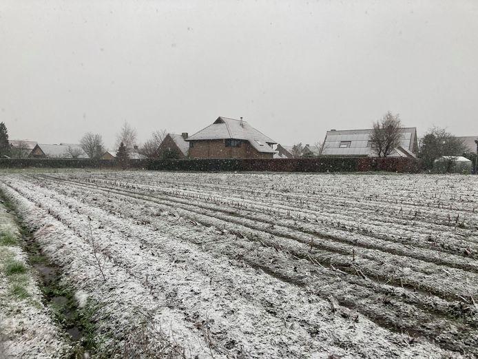 De eerste sneeuw in Torhout.