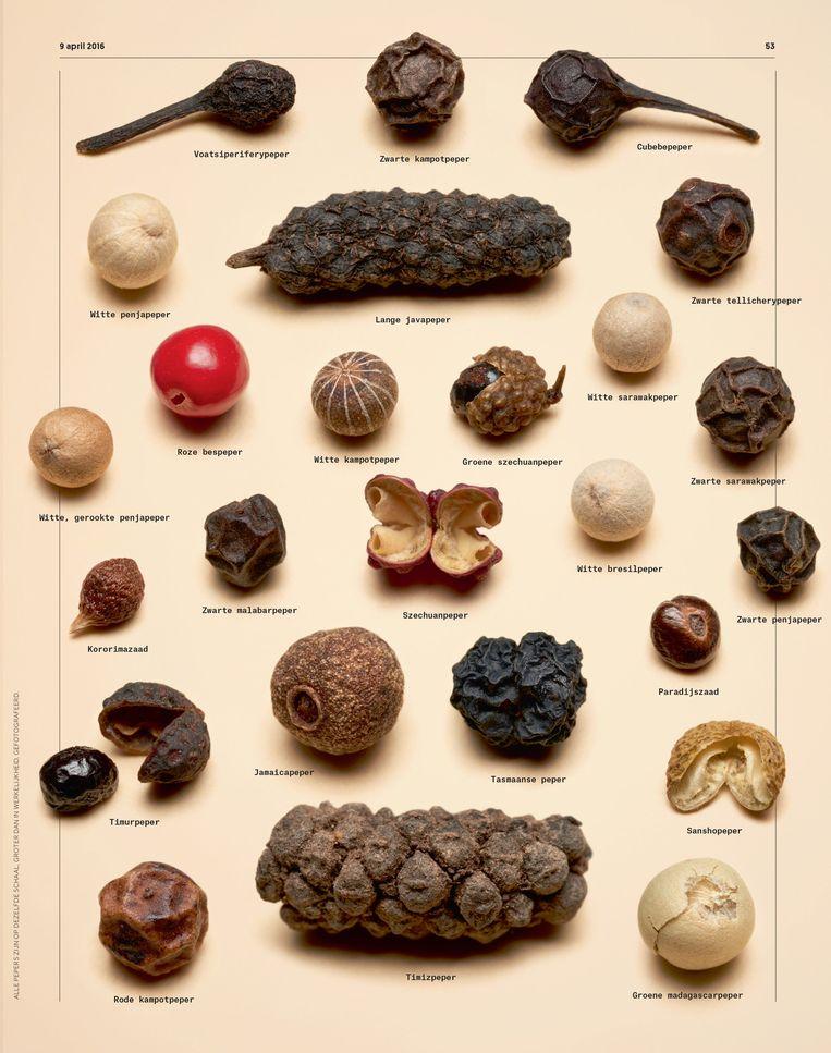 Alle pepers zijn op dezelfde schaal, groter dan de werkelijkheid gefotografeerd. Beeld Rein Janssen