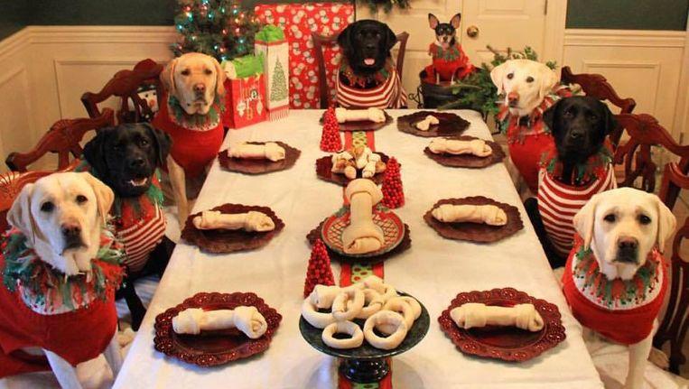 Kersttrui Familie.Bij Deze Dierenvriend Mogen Ook De Honden Mee Aan Tafel Familie