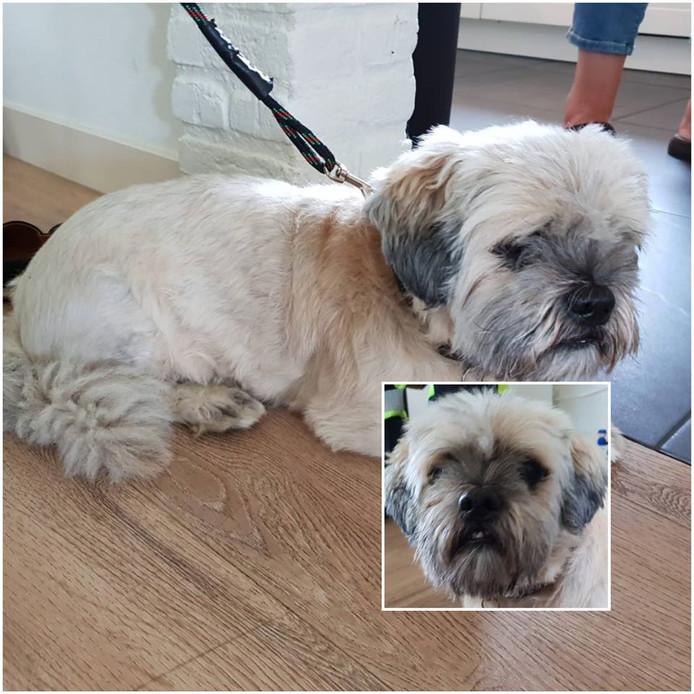 Het hondje dat op 3 september gevonden is