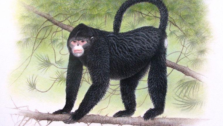 Onder andere deze aap met een open neus werd ontdekt. Beeld ap