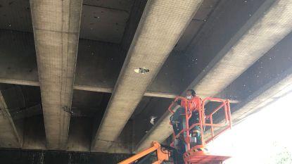 Kadavers van duiven uit netten onder brug gehaald