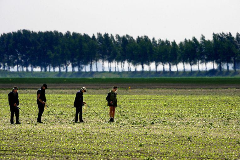 Vakantiewerkers spuiten gif tegen onkruid tussen de suikerbietplanten in Wouwse Plantage, Noord-Brabant.  Beeld ANP