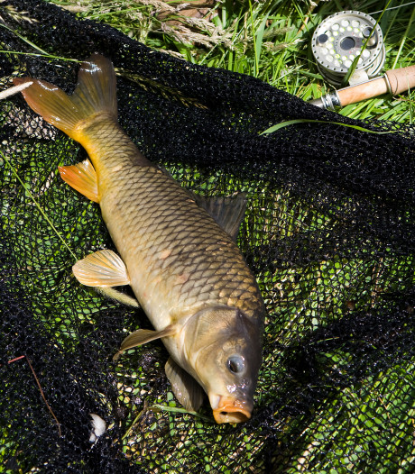 Vissers Woudrichem slaan alarm om waterkwaliteit: 'Een nachtmerrie'