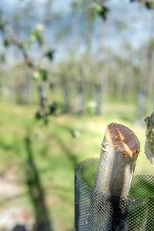 Agriterreur houdt aan: nu weer 2.500 fruitboompjes gezaagd