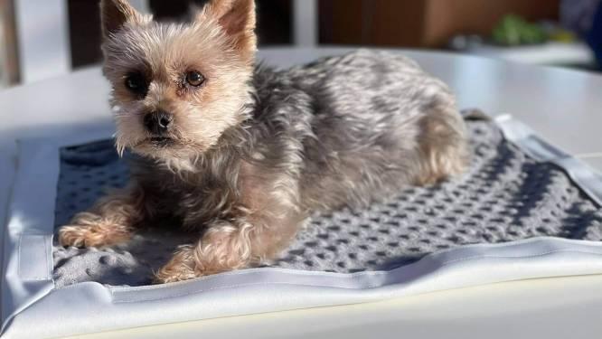 Vives-studenten ontwerpen wasbare zindelijkheidsdoekjes voor pups