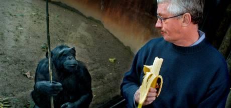 'Chimpansees zijn mijn collega's, soms begroeten ze me en soms hebben ze geen tijd'