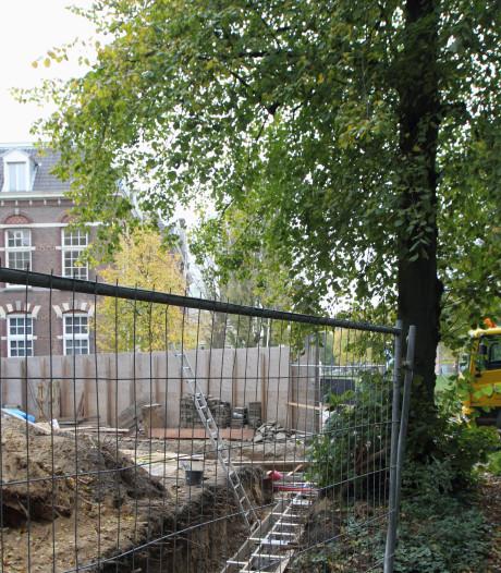 Zwolle Groenstad: 'Bomen slachtoffer van bouwprojecten'