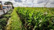 Seksfeestje Langemark: de mannen achter de foto's vanuit het maïs getuigen