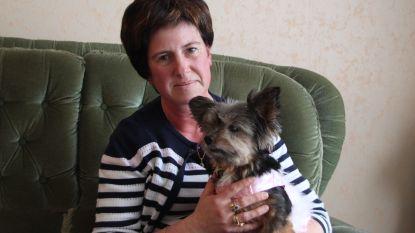 """Vrouw past op chihuahua voor buren: """"Maar plots bleek ik een gestolen hondje in mijn bezit te hebben. Het deed pijn om haar te moeten afgeven"""""""