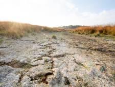 Giga-inspanning Wierdense Veld: 'Natuurherstel mag bewoners niet duperen'