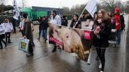 """Bite Back protesteert tegen """"slachthuis zonder vergunning"""" in Oevel"""
