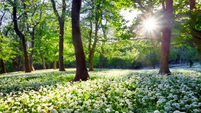 Nog enkele uren geduld: straks om 17.15 uur begint de lente officieel