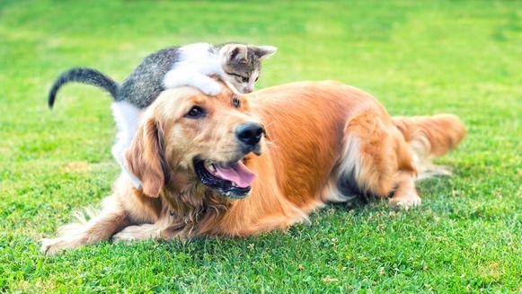 In principe kunnen honden en katten het nieuwe coronavirus niet oplopen.