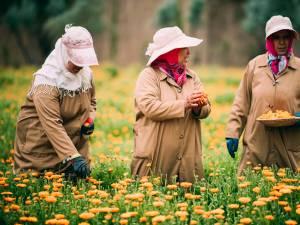 Les jardins de l'Ourika à Marrakech: là où Yves Saint Laurent puise ses secrets de beauté