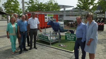 Grote koe op Rheinbachplein tegen zwerfvuil