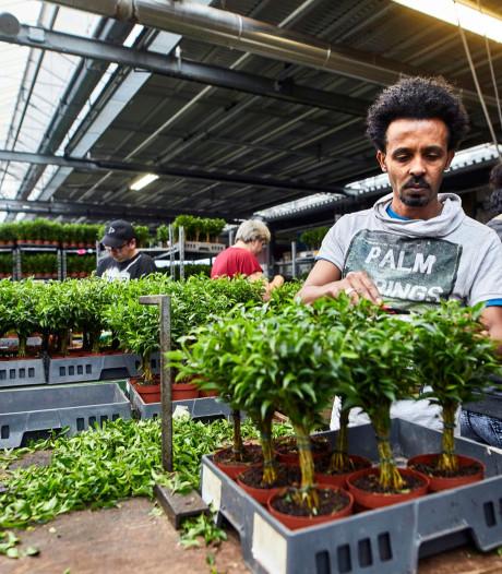 Vaart achter huisvesting arbeidsmigranten in Westland