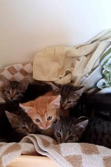 Verbazing bij medewerkers dierenambulance: 'Wie stopt er nou kittens in een zak?