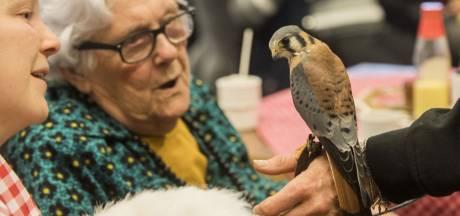 Valken en uilen op TMZ Tubbergen: U mag ze niet aaien!