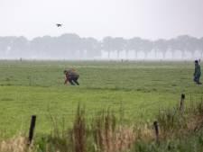 Grutto brengt vogelaars en jagers samen: 'slimme' vangkooien in strijd tegen vijand van weidevogels