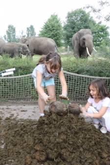 Olifantendrollenstapelen tijdens viespeukenweek in Dierenrijk Nuenen