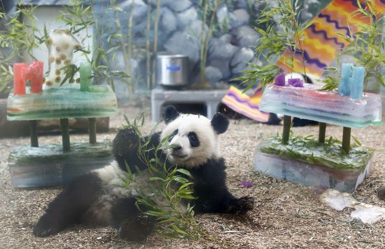 Panda Mei Huan in de dierentuin van Atlanta. Beeld epa