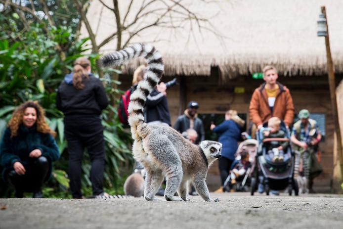 Bezoekers in het thema Jungola in Wildlands Adventure Zoo.