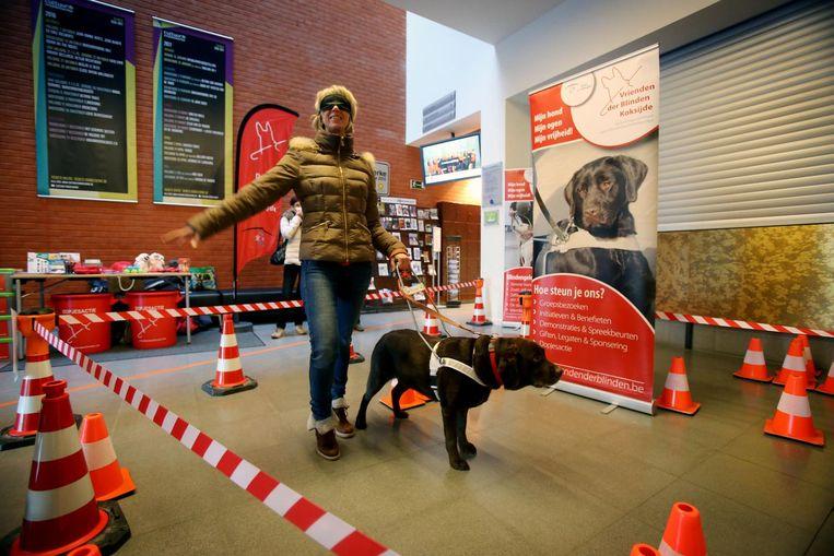 Een blindengeleidehond gidst Ann Derycke langs het parcours.