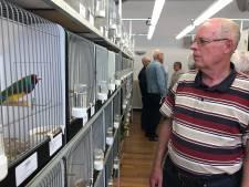 Kampioenenkweker Wim Moerland: 'Ik geef mijn vogels elke dag een lauwwarme douche met shampoo'