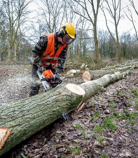 Buren kapt 140 bomen in gemeente