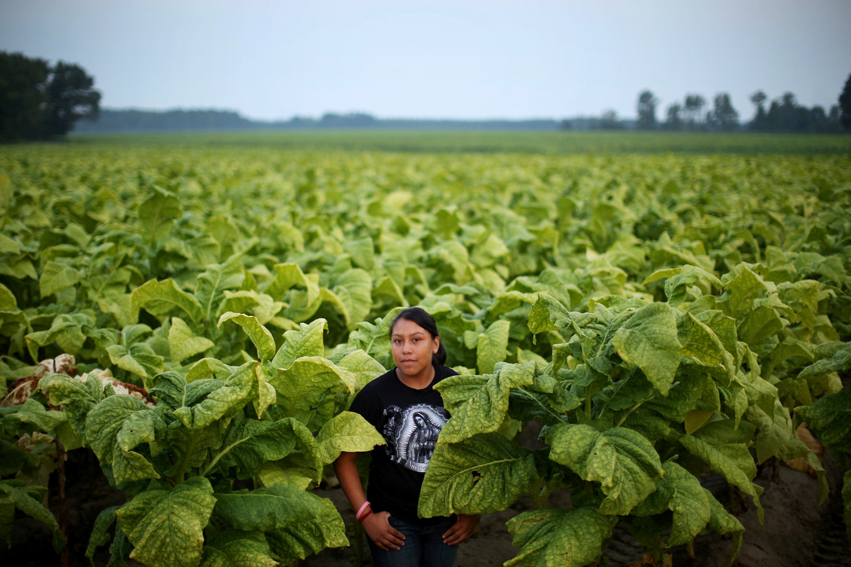 Een 13-jarige tabaksplukster in de Amerikaanse staat North Carolina.