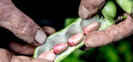 Tuinbonen komen nu van het land: dit zijn de lekkerste