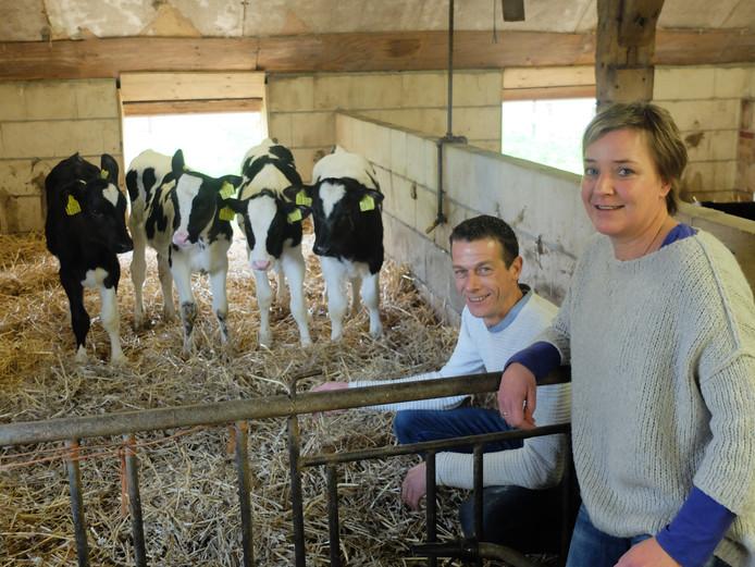 Theo en Lianne van Steeg pakken het anders aan met hun stierkalveren.