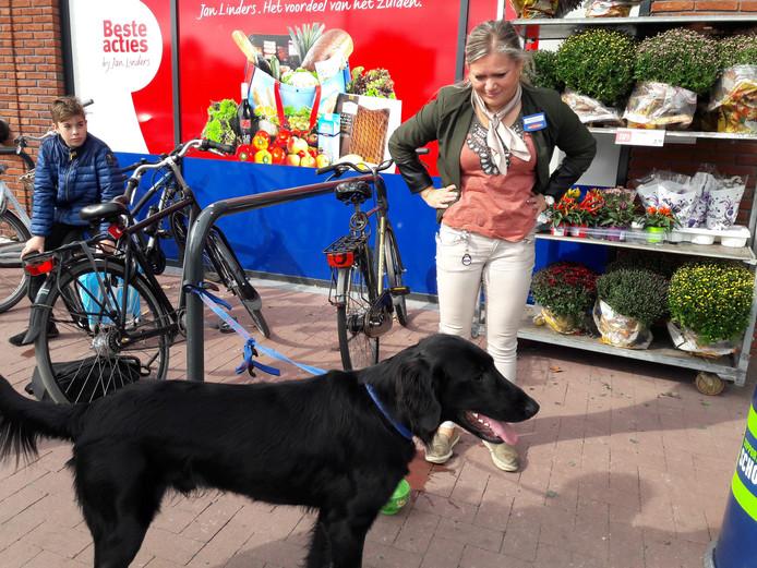 De 'boodschappenhond' bij de Jan Linders in Groesbeek.