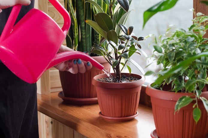 De apps geven onder meer aan wanneer je je planten water moet geven.