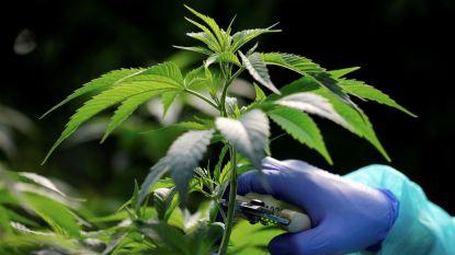 Man gebruikt werkvergunning om drugs te kopen in Nederland: 75 gram cannabis aangetroffen in wagen