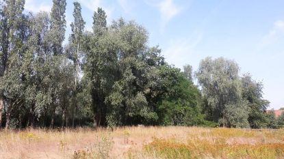 """Zo'n 100 bomen op groenzone waar cyclocross plaatsvindt, worden gekapt: """"Maar we planten er minstens evenveel terug"""""""