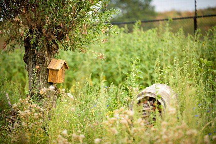 Het Zonneveld: takkenwallen, wilgen, insectenhotels en het terrein wat klaar ligt om bebouwd te worden met zonnepanelen.