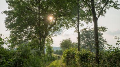 De natuur als beautysalon: kom stralend én gezonder terug uit het bos