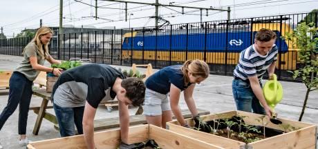 Helicon en VoedSpoor: eetbaar groen op 13 plekken in Tilburg
