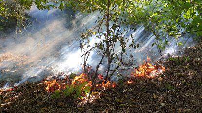 Brandweer voorkomt dat bosbrand uitbreidt naar parking