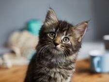 Une appli de rencontres remplace les photos de pénis… par des chatons