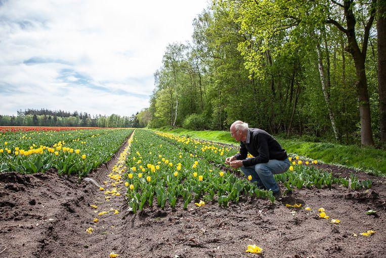 Rob Crispijn, een bezorgde bewoner van Vledderveen, die dicht in de buurt van bespoten bloembollen woont. Beeld Harry Cock